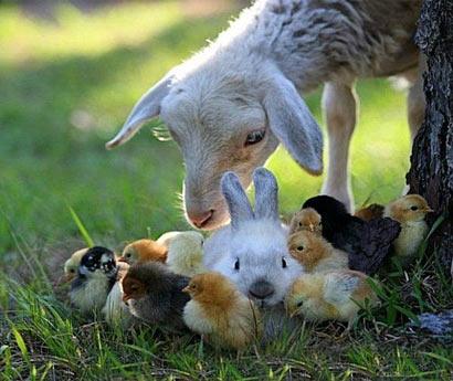 动物尊严.jpg